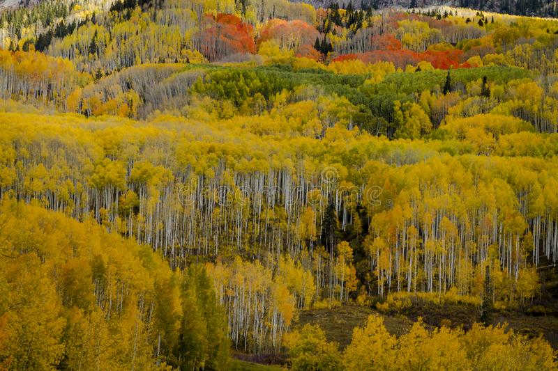 Autumn Color i San Juan och Rocky Mountains av Colorado arkivfoto