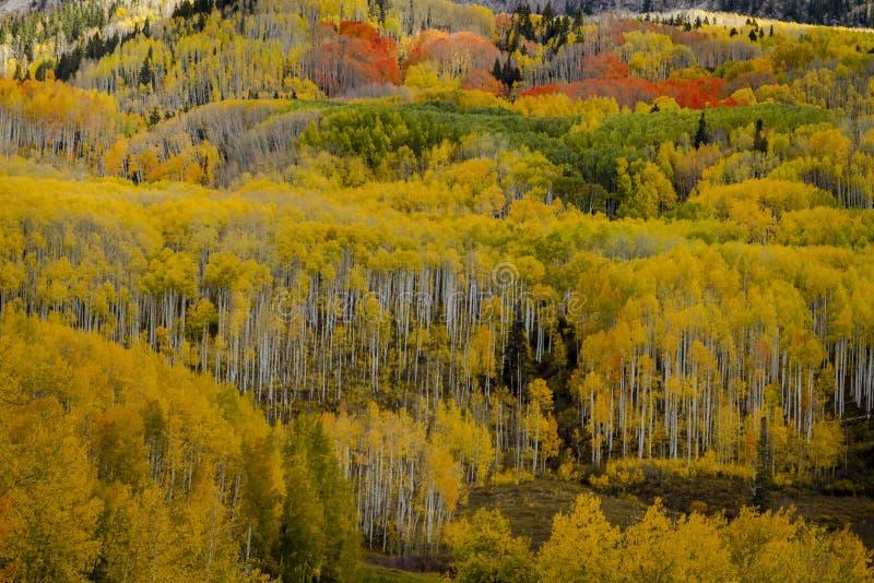 Autumn Color i San Juan och Rocky Mountains av Colorado arkivfoto