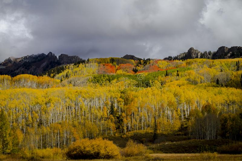 Autumn Color i San Juan och Rocky Mountains av Colorado royaltyfri bild