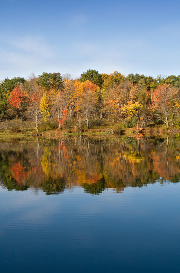 Download Autumn Color Leaves On Lake Stock Image - Image: 11530451