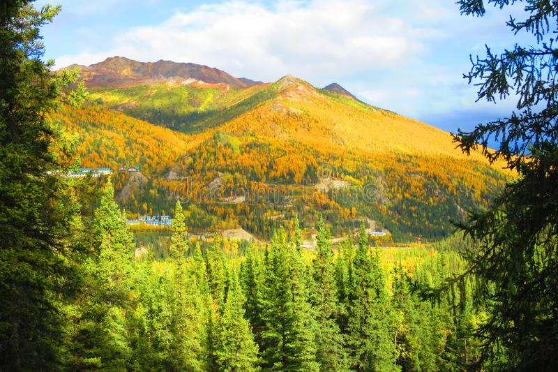 Autumn Color Nationalparks Denali in Alaska lizenzfreie stockbilder