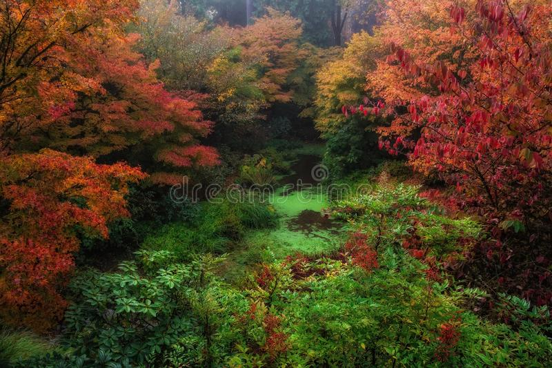 Autumn Color, Washington State. Autumn color in Bellevue Botanical Gardens stock photo