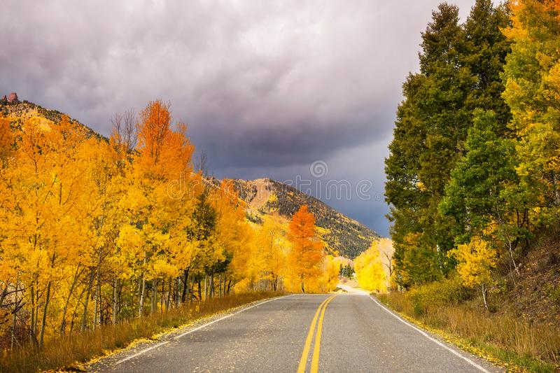 Autumn in Colorado. Colorful yellow autumn in Colorado, United States. Fall season royalty free stock photo