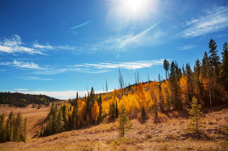 Autumn in Colorado. Colorful yellow autumn in Colorado, United States. Fall season royalty free stock photos