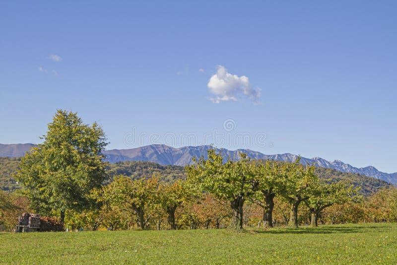 Autumn in the Monti Lessini stock images