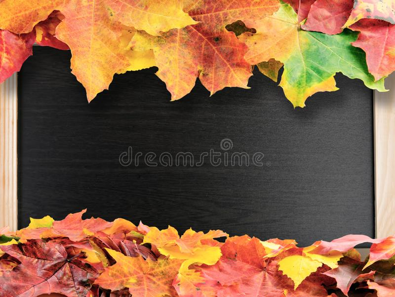 Autumn colored fall leaves on shcool blackboard. Red and yellow autumn colored fall leaves on shcool blackboard background with copy space royalty free stock photos