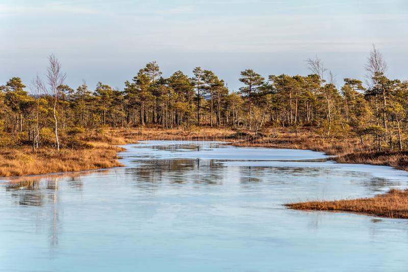 Autumn colored flora of winter peat bog and its reflection in swamp frozen lake, sunny day with blue sky stock images