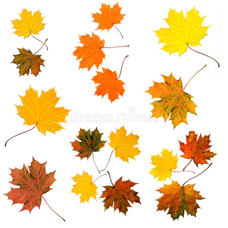 Download Autumn colored leaves stock illustration. Image of nature - 6407692