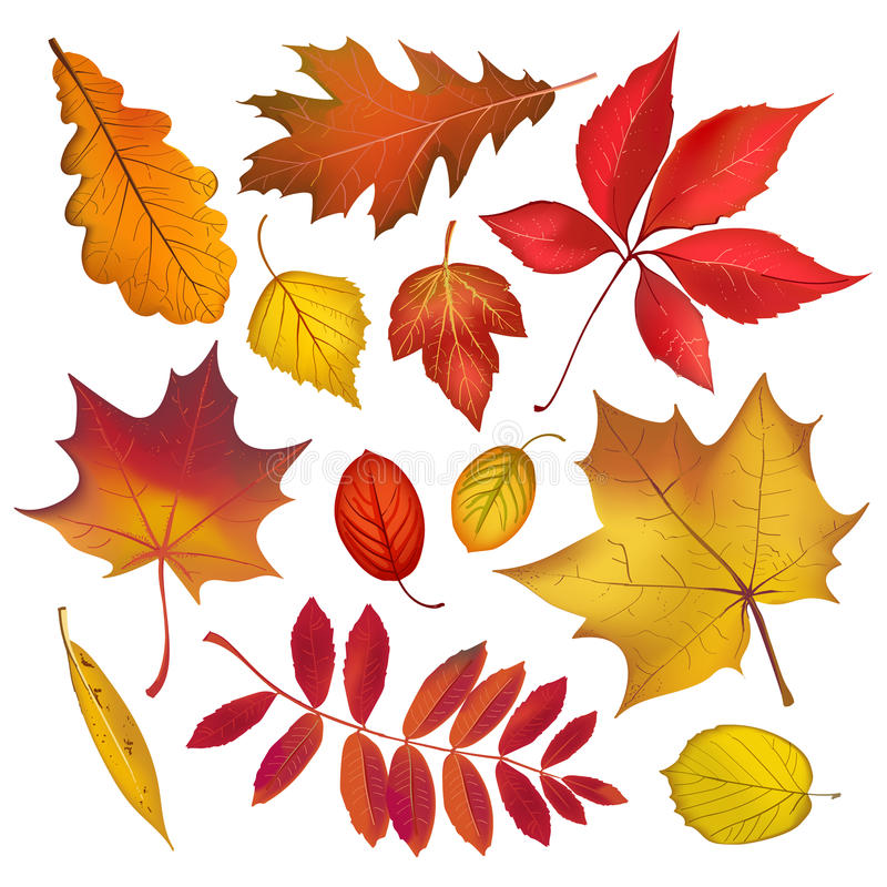 Free Autumn Colored Leaves Collection Stock Photos - 98742523