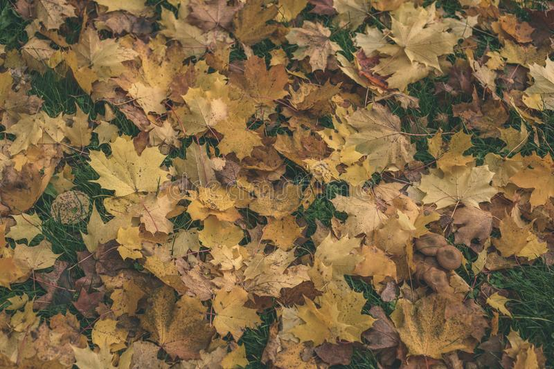 autumn colored tree leaves background pattern in sunny park - vi stock photography