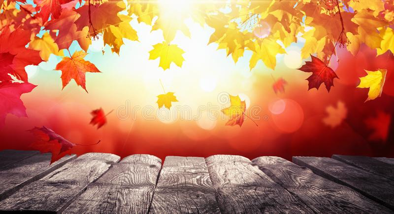 Autumn Colorful Background With Leaves al sole fotografie stock