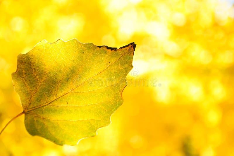 Autumn Colorful-bladeren met mooie achtergrond stock foto