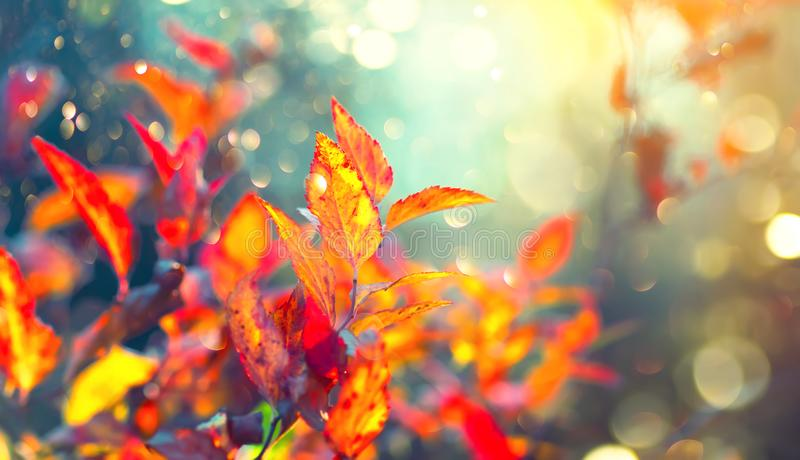 Autumn colorful bright leaves swinging in a tree in autumnal park. Fall colorful background. Beautiful nature scene royalty free stock images