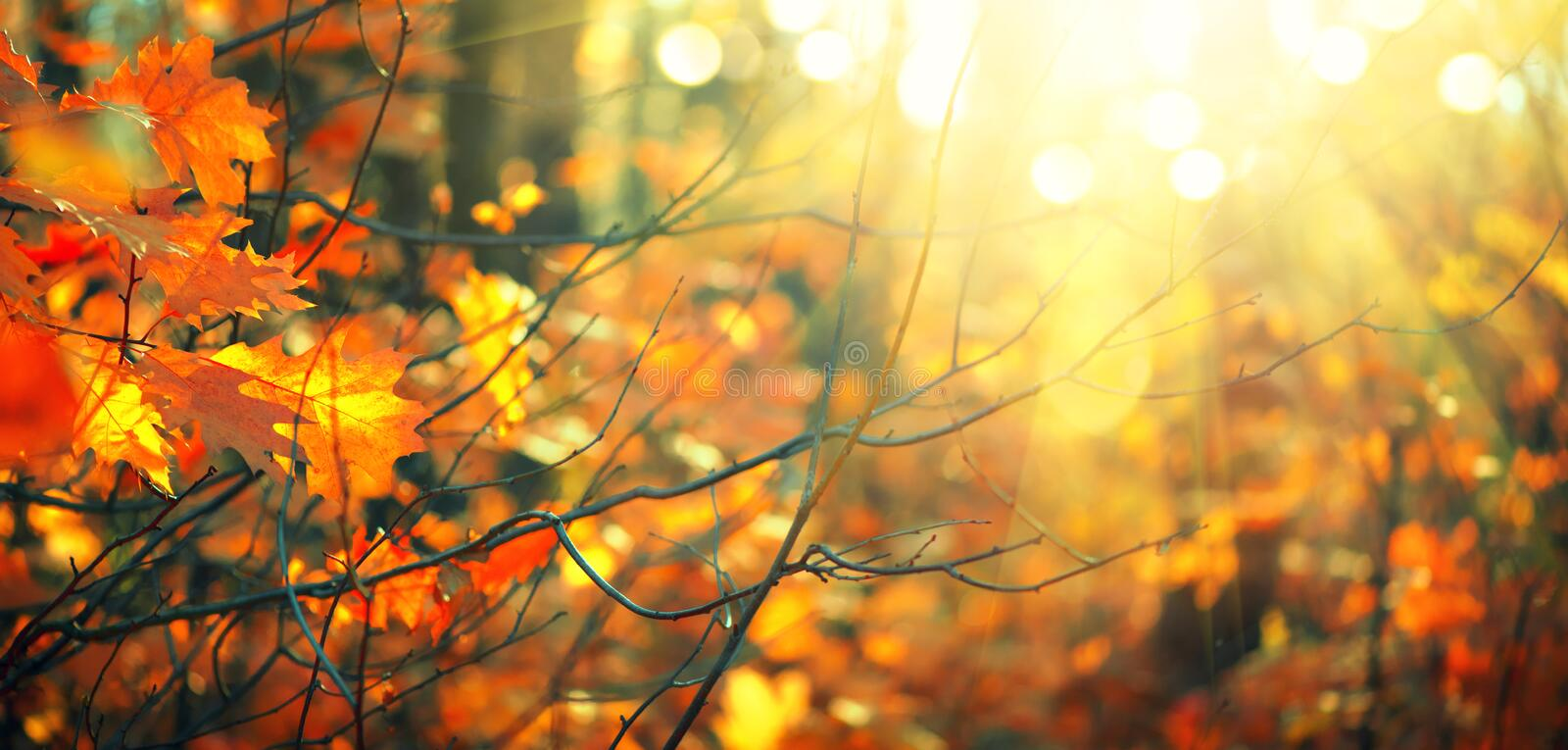 Autumn colorful bright leaves swinging in a tree in autumnal park. Fall colorful background. Beautiful nature scene royalty free stock photos