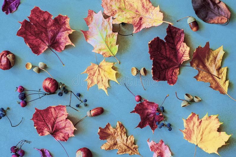 Autumn colorful faded leaves, acorns, chestnuts, nuts on blue background. Vintage backdrop. Concept of leaf fall, autumn royalty free stock images