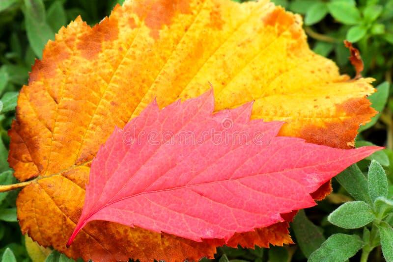 Autumn leaves on the green grass. Autumn colorful fallen leaves on the green grass stock images
