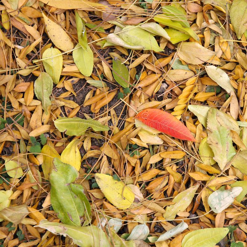 Autumn with colorful leaves at botanical garden. royalty free stock photos