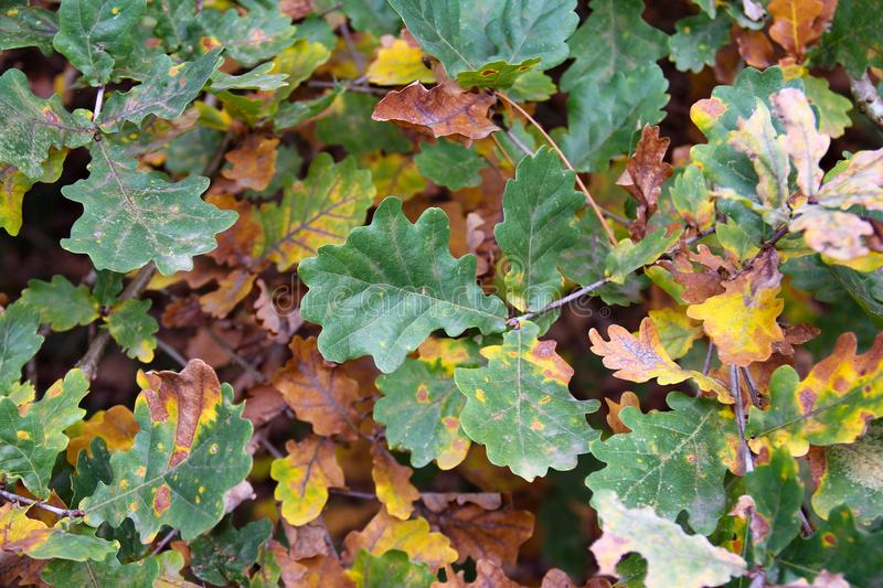Autumn. Colorful leaves at botanical garden. stock image