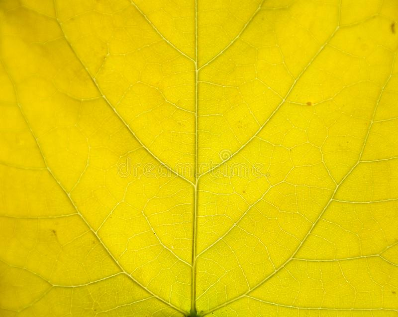 nature Leaf texture royalty free stock photography