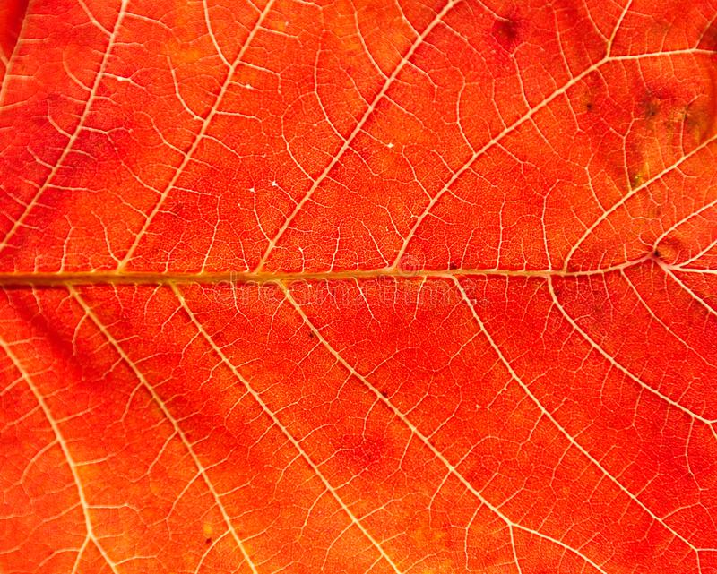 nature Leaf texture royalty free stock photos
