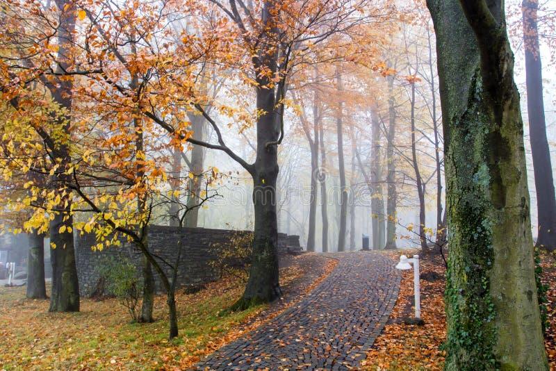 Autumn Colorful Pathway auf dem Petersberg Koenigswinter Deutschland lizenzfreies stockfoto