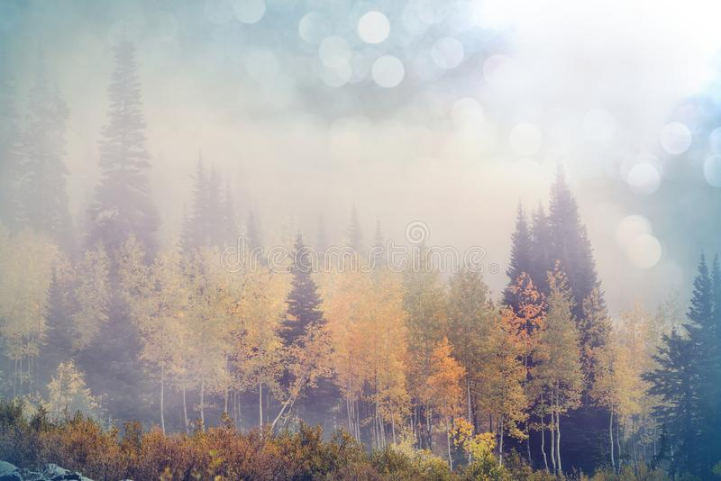 Autumn. Colorful scenic view in Autumn season with yellow trees in clear day royalty free stock image