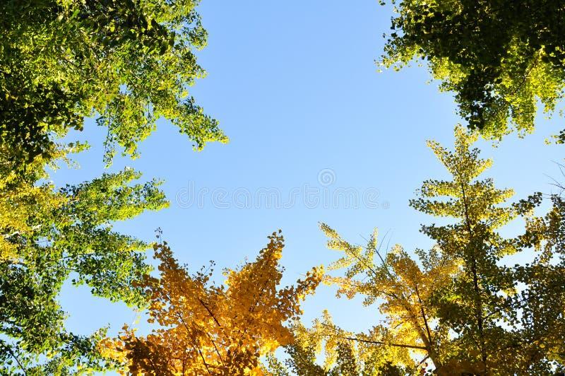 trees of autumn stock image