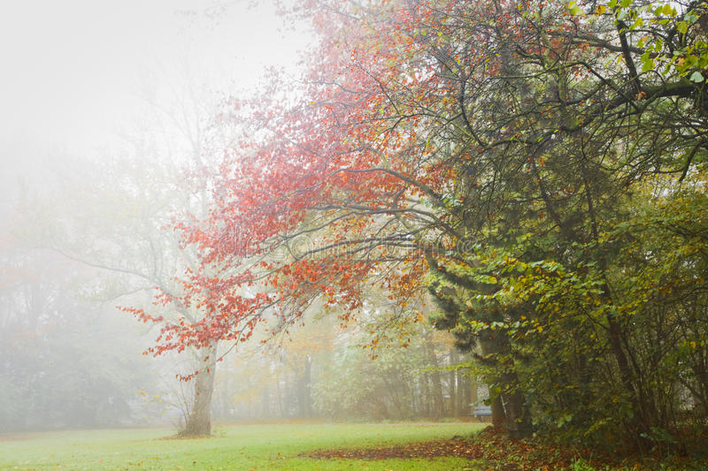 Autumn - Colorful trees in the mist. Fog in November - Colorful trees in the mist in fall royalty free stock photography