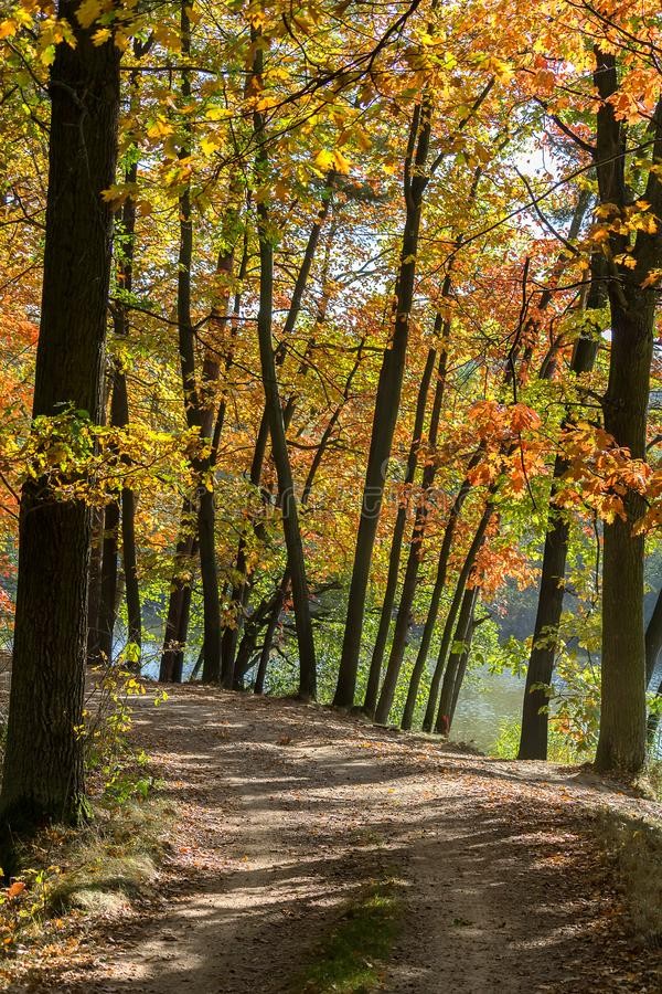Autumn colorful trees with path and water, Czech landscape.  stock photos