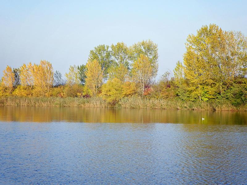 Autumn Colorful Trees Reflecting in River stock photo