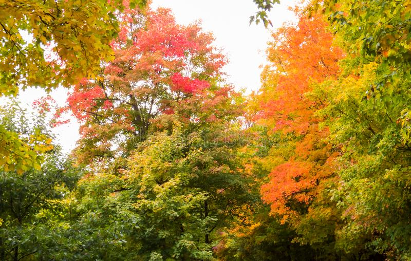 Autumn 2018: Colorful trees in the bright sunlight. Autumn 2018: Colorful trees from a small Provincial Park in the Province of Quebec, Canada royalty free stock photography