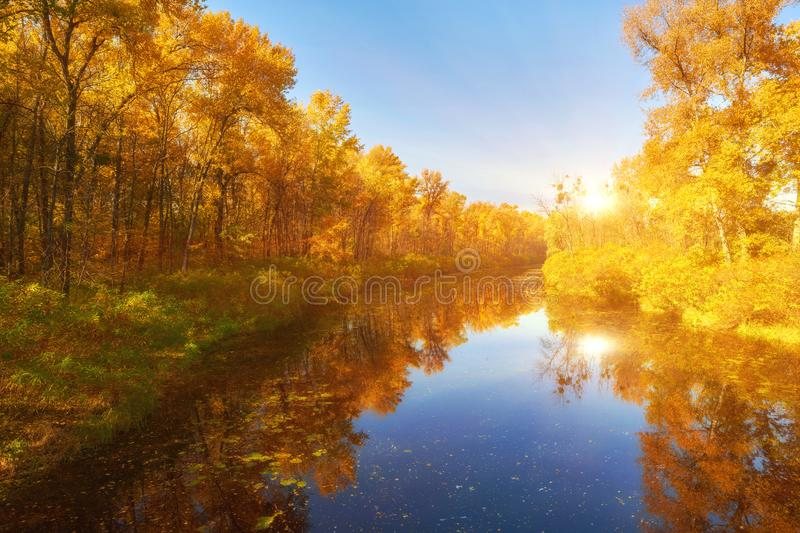 autumn colorful trees under morning sunlight reflecting in river stock photography