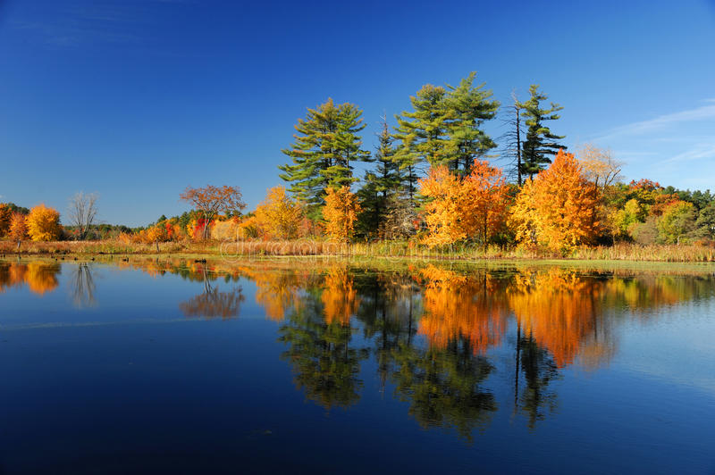 Autumn colorful trees under morning sunlight reflecting in tranquil river stock image