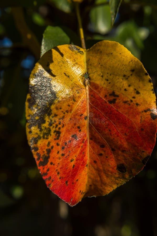 Autumn Colors 01 arkivfoton