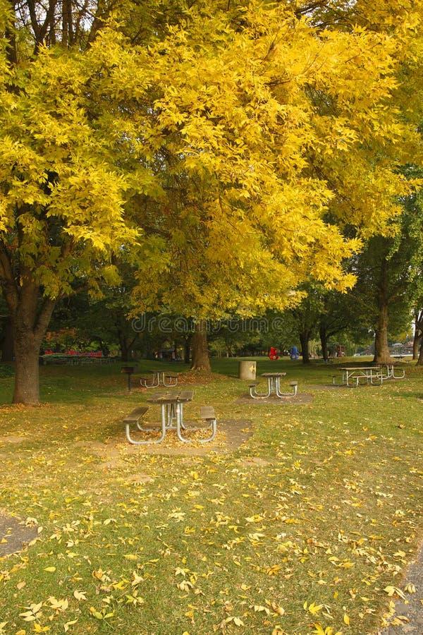 Download Autumn Colors stock photo. Image of meadows, lake, autumn - 11339686