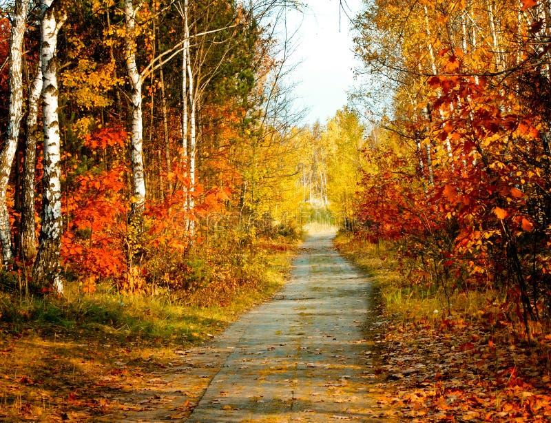 Download Autumn colors stock photo. Image of colour, flora, colors - 12130402