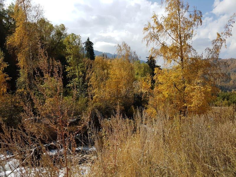 Autumn Colors image libre de droits