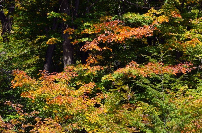 Autumn Colors fotografía de archivo libre de regalías