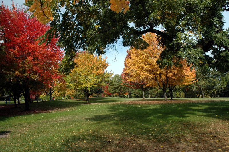 Download Autumn Colors stock photo. Image of bright, branches, outdoors - 1417850
