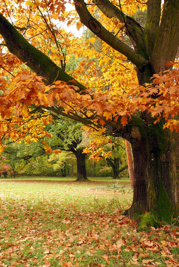 Free Autumn Colors Royalty Free Stock Photos - 14792448