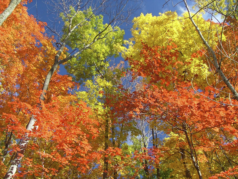 Download Autumn Colors Royalty Free Stock Images - Image: 197039