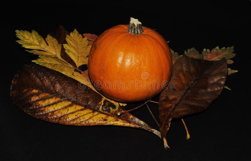 Download Autumn Colors stock image. Image of green, pumpkin, vine - 21612847