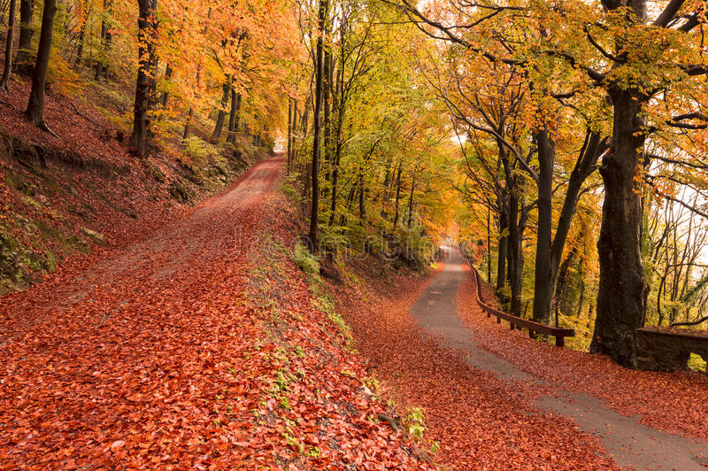 Autumn colors. Autumn season, colors and shades of nature royalty free stock images