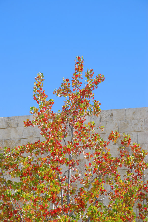 Download Autumn Colors Stock Photo - Image: 3235210