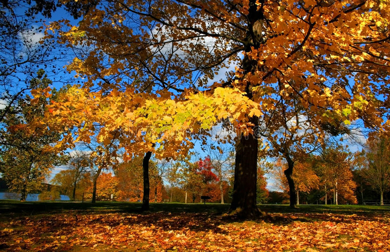 Autumn Colors. Autumn trees in a park during autumn time stock image