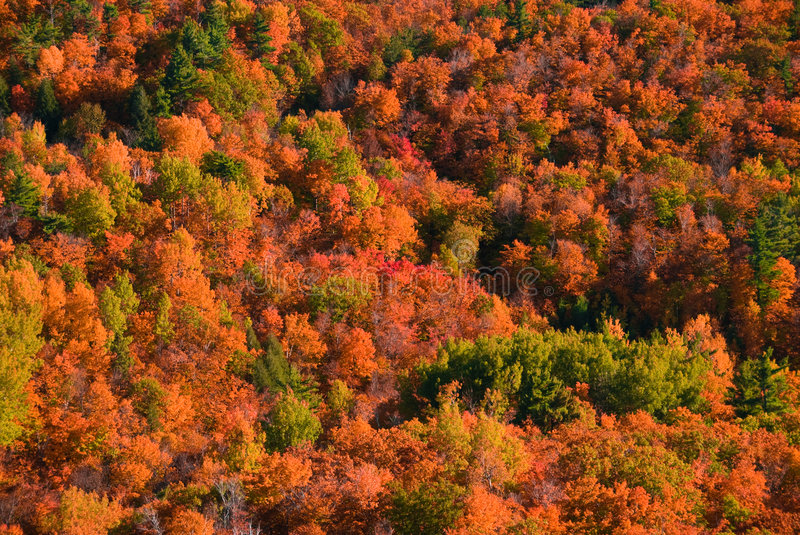 Autumn colors. Autumn forest viewed from above with lots of colors royalty free stock photo