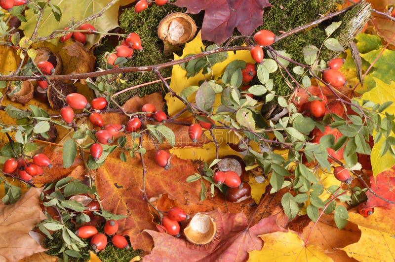 Download Autumn Colors image stock. Image du instruction, centrale - 45350761