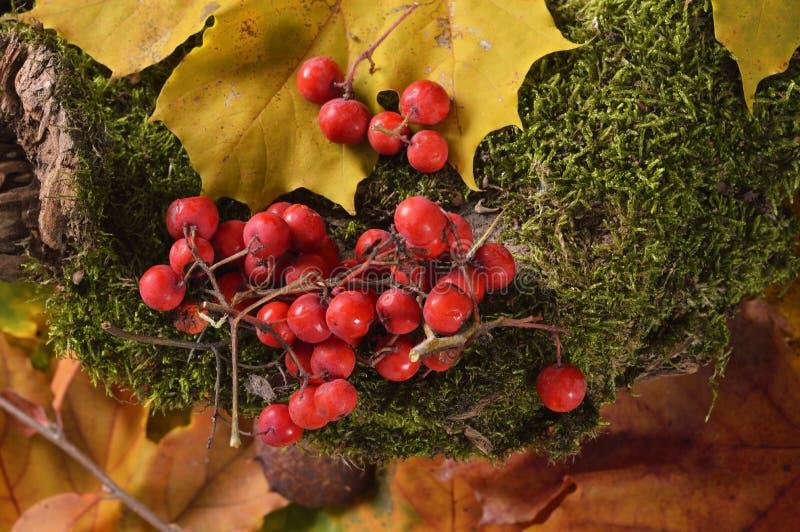 Download Autumn Colors photo stock. Image du zone, rouge, détendez - 45350836