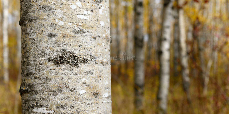 Autumn Colors imagens de stock