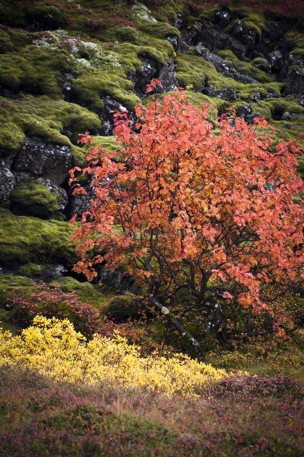 Autumn Colors foto de stock